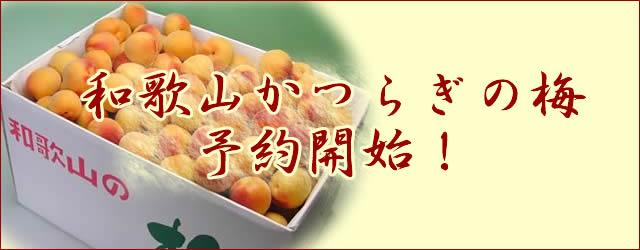 和歌山かつらぎの梅