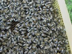 蜂がいっぱい
