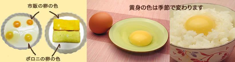 卵の黄身の色