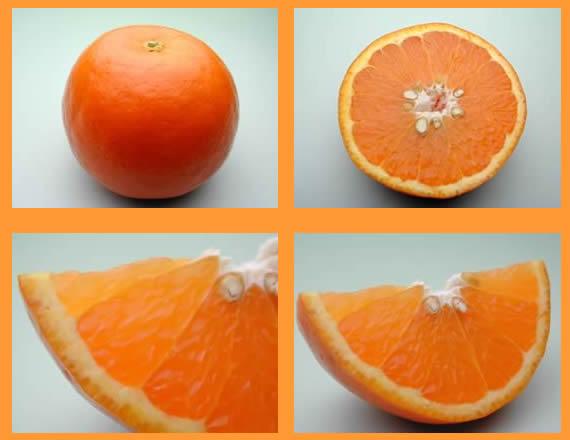 栗山園のセミノールオレンジ