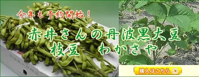赤井さんの丹波黒大豆枝豆