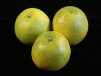 ライムグリーンの国産バレンシアオレンジ