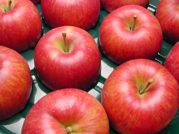 りんご シナノスイート